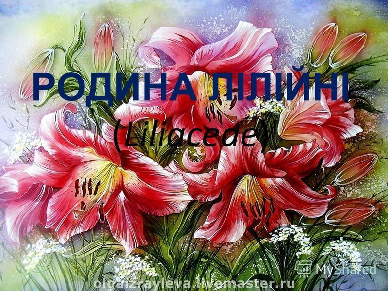 РОДИНА ЛІЛІЙНІ (Liliaceae)
