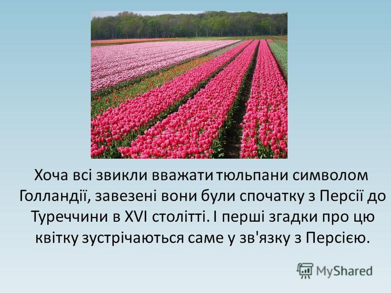 Хоча всі звикли вважати тюльпани символом Голландії, завезені вони були спочатку з Персії до Туреччини в XVI столітті. І перші згадки про цю квітку зустрічаються саме у зв'язку з Персією.