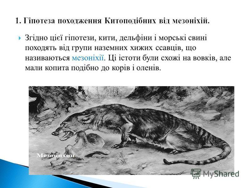 Згідно цієї гіпотези, кити, дельфіни і морські свині походять від групи наземних хижих ссавців, що називаються мезоніхії. Ці істоти були схожі на вовків, але мали копита подібно до корів і оленів.