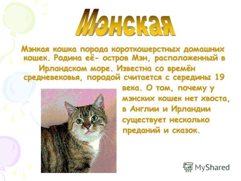 Мэн-Кун порода полу длинношерстных домашних кошек. Предки её первоначально жили в Северной Америке (штат Мэн). Впервые были представлены на выставке в США в 1859, считается самой большой кошкой (вес достигает 15 кг.). Стандарт принял 1983.