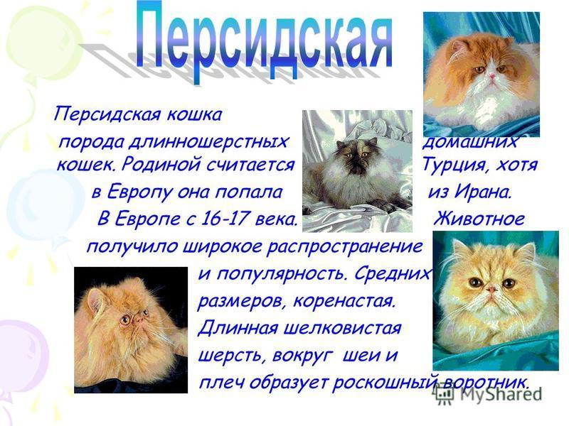 Ориентальная кошка, порода короткошерстных домашних кошек. Порода появилась от скрещивания сиамской кошки с обычной домашней кошкой Порода создана в Англии. Существует свыше 40 цветных вариаций.