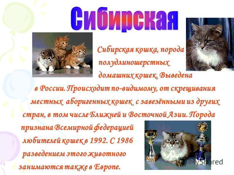 Р эгдолл, порода полу длинношерстных домашних кошек. Внешне напоминает бирманскую кошку, но имеет более широкую грудь, массивную заднюю часть туловища. толще ноги; вес кота достигает 7-10 кг. Родоначальниками породы явились белая персидская голубогла