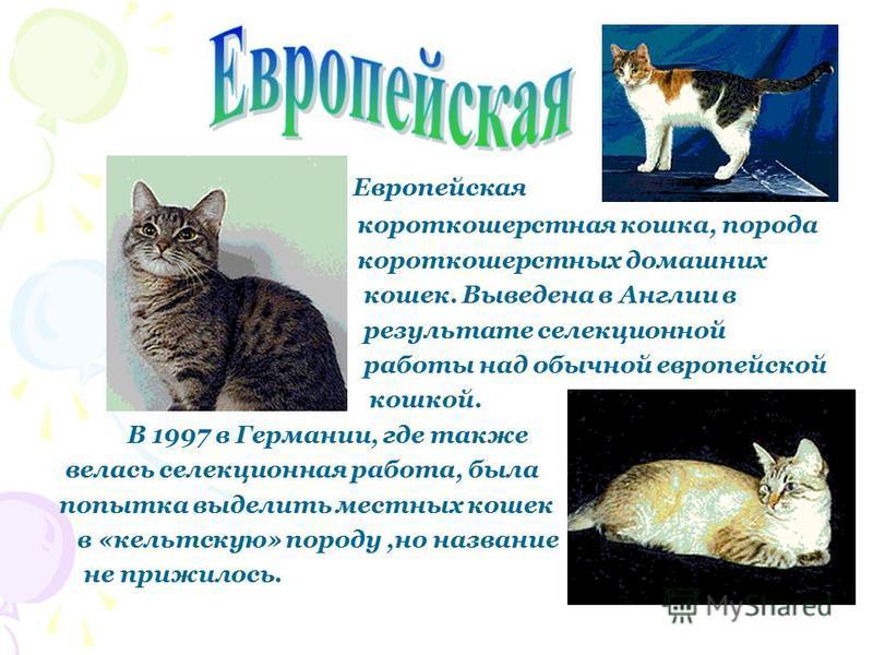 Рексы, группа пород домашних кошек с короткой волнистой шерстью. Появились в следствии случайной мутации у европейских короткошерстных кошек; названы так из-за схожей мутации у кроликов.