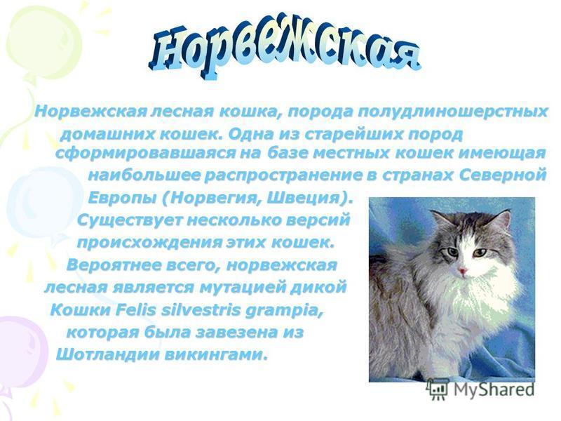 Корат, порода короткошерстных домашних кошек азиатского происхождения. Своё имя получили по названию одной из провинций Таиланда, где их называют «си-сават», что означает «плод-совета» т.к окраска кошек напоминает цвет этих плодов. Издавна разводилис