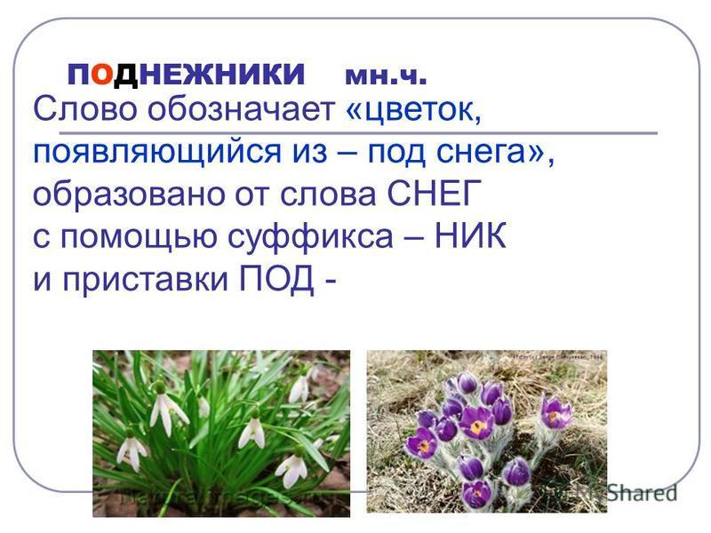 Выполните синтаксический разбор предложения. Обозначьте все изученные орфограммы. Белые подснежники( 2 ) зелёными листьями раздвинут( 3 ) сухую траву.( 4 )