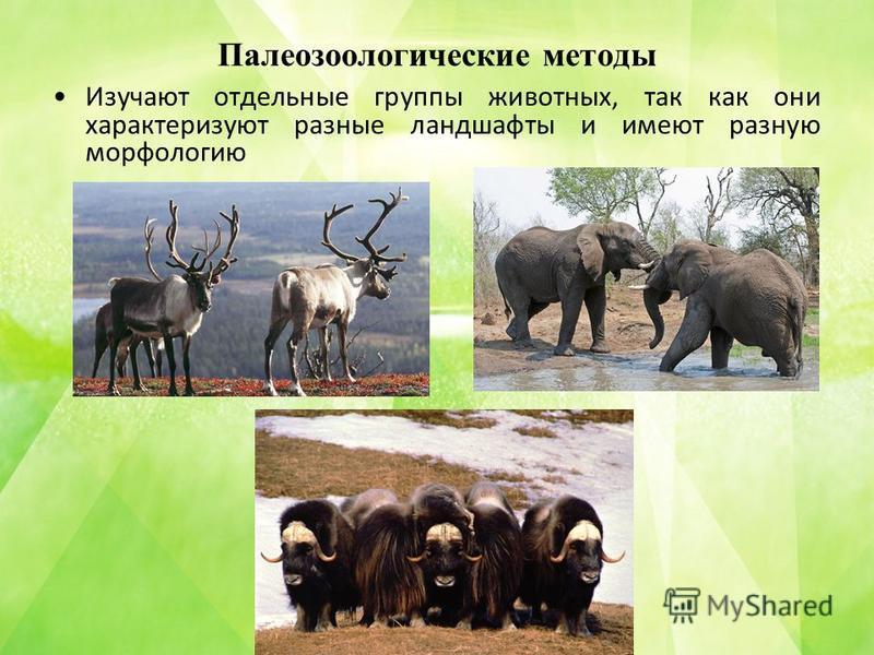 Палеозоологические методы Изучают отдельные группы животных, так как они характеризуют разные ландшафты и имеют разную морфологию