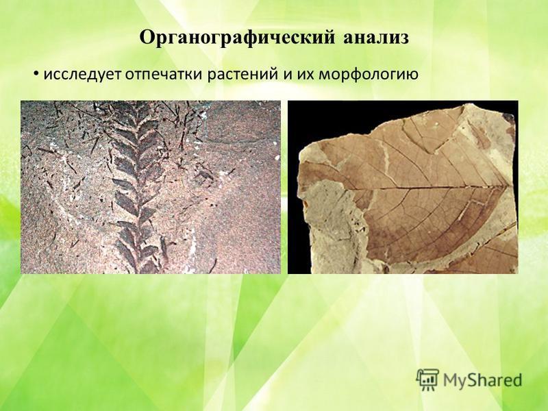Органографический анализ исследует отпечатки растений и их морфологию