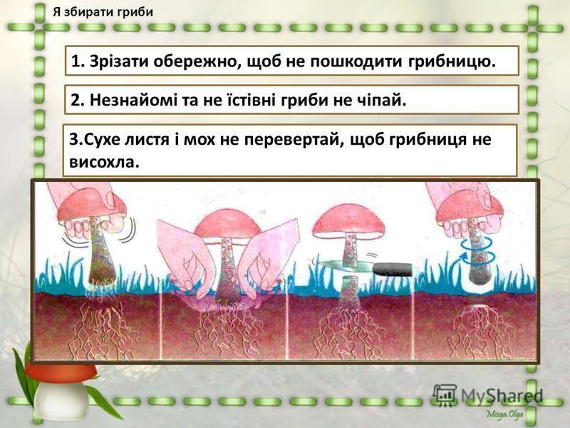 Я збирати гриби 1. Зрізати обережно, щоб не пошкодити грибницю. 2. Незнайомі та не їстівні гриби не чіпай. 3.Сухе листя і мох не перевертай, щоб грибниця не висохла.