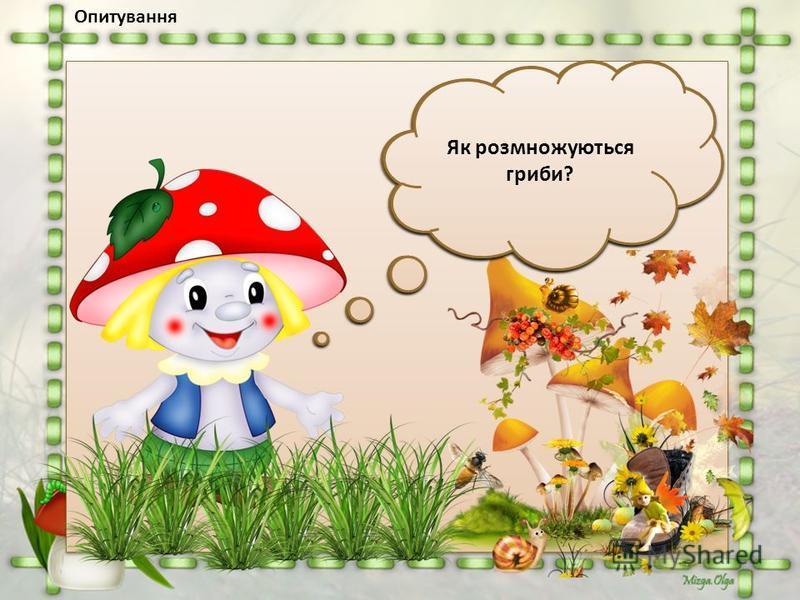 Опитування З яких частин складаються гриби? Поміркуй, чому кажуть, що грибниця - головна частина гриба? Які ти знаєш їстівні гриби? Отруйні? Яких правил потрібно дотримуватися збираючи гриби? Як розмножуються гриби?