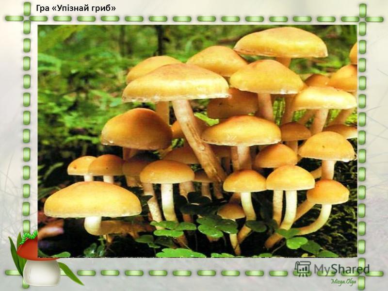 Гра «Упізнай гриб»