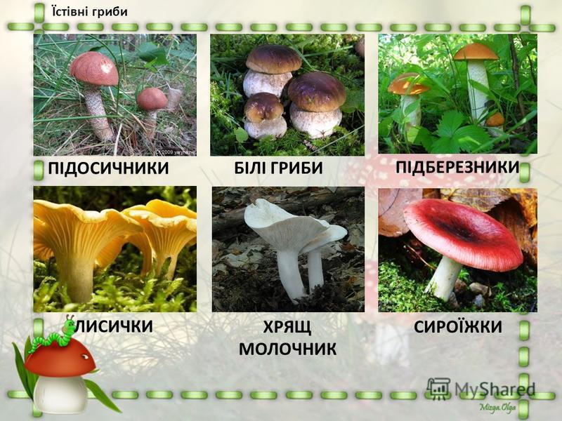 ПІДОСИЧНИКИ БІЛІ ГРИБИ ЛИСИЧКИ ХРЯЩ МОЛОЧНИК ПІДБЕРЕЗНИКИ СИРОЇЖКИ Їстівні гриби