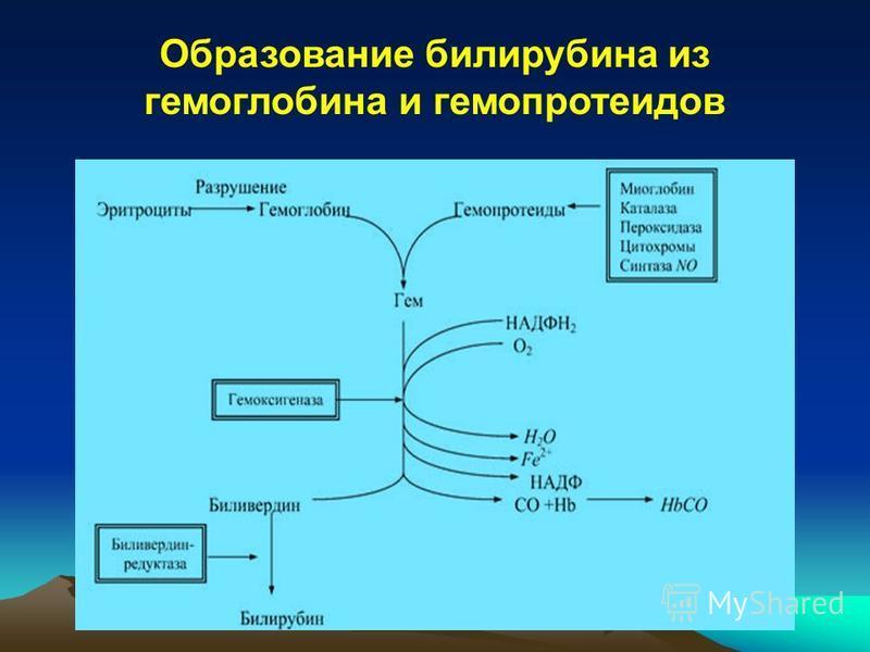 Образование билирубина из гемоглобина и гемопротеидов