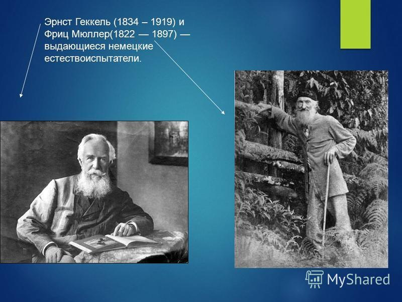 Эрнст Геккель (1834 – 1919) и Фриц Мюллер(1822 1897) выдающиеся немецкие естествоиспытатели.
