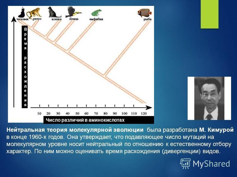 Нейтральная теория молекулярной эволюции была разработана М. Кимурой в конце 1960-х годов. Она утверждает, что подавляющее число мутаций на молекулярном уровне носит нейтральный по отношению к естественному отбору характер. По ним можно оценивать вре