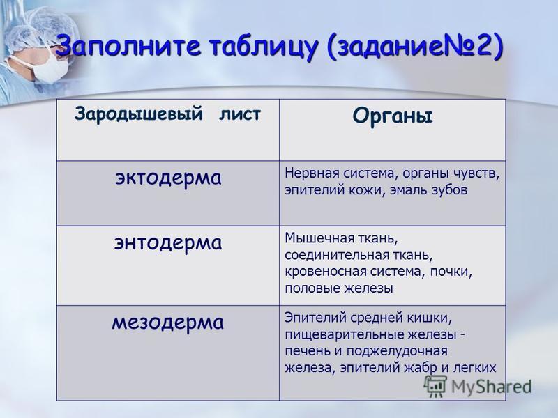 Заполните таблицу (задание 2) Зародышевый лист Органы эктодерма Нервная система, органы чувств, эпителий кожи, эмаль зубов энтодерма Мышечная ткань, соединительная ткань, кровеносная система, почки, половые железы мезодерма Эпителий средней кишки, пи