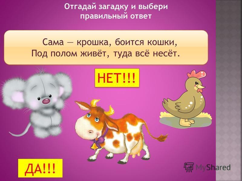 Назови животных. Оставь на ферме только домашних животных. Убери лишних.