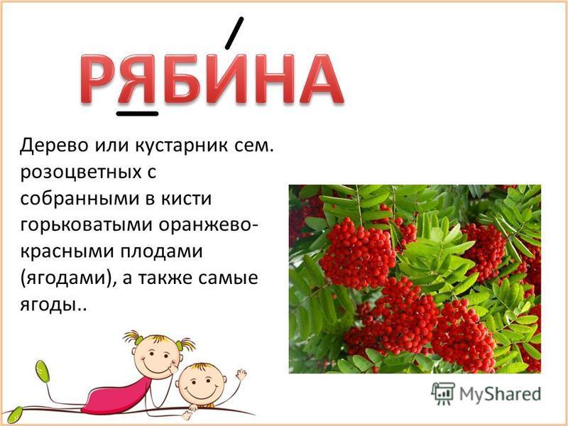 Дерево или кустарник сем. розоцветных с собранными в кисти горьковатыми оранжево- красными плодами (ягодами), а также самые ягоды..