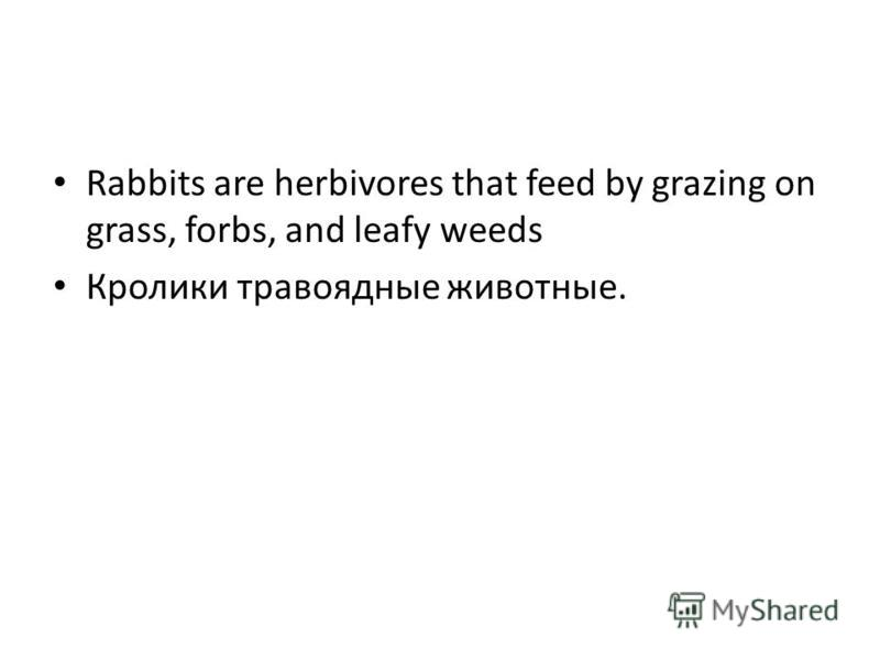Rabbits are herbivores that feed by grazing on grass, forbs, and leafy weeds Кролики травоядные животные.