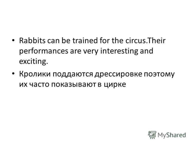 Rabbits can be trained for the circus.Their performances are very interesting and exciting. Кролики поддаются дрессировке поэтому их часто показывают в цирке