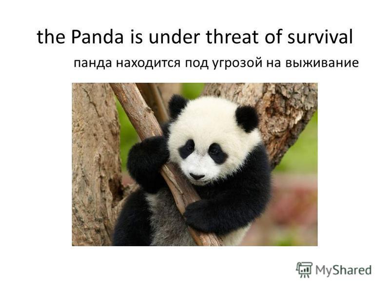 the Panda is under threat of survival панда находится под угрозой на выживание