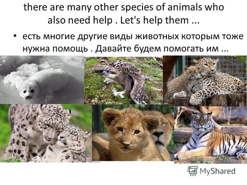 there are many other species of animals who also need help. Let's help them... есть многие другие виды животных которым тоже нужна помощь. Давайте будем помогать им...