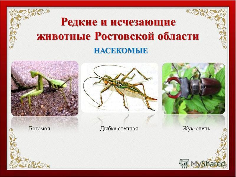 Редкие и исчезающие животные Ростовской области Богомол Дыбка степная Жук-олень НАСЕКОМЫЕ