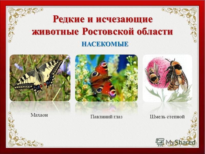 Редкие и исчезающие животные Ростовской области Махаон Павлиний глаз Шмель степной НАСЕКОМЫЕ