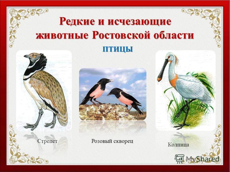 Редкие и исчезающие животные Ростовской области Стрепет Колпица ПТИЦЫ Розовый скворец