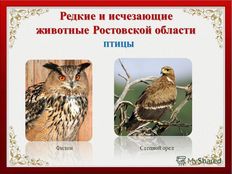 Редкие и исчезающие животные Ростовской области Филин Степной орел ПТИЦЫ