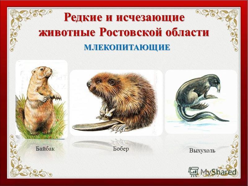 Редкие и исчезающие животные Ростовской области Байбак Бобер МЛЕКОПИТАЮЩИЕ Выхухоль