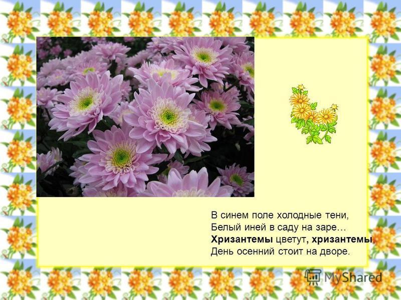 В синем поле холодные тени, Белый иней в саду на заре… Хризантемы цветут, хризантемы, День осенний стоит на дворе.