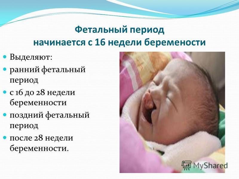 Фетальный период начинается с 16 недели беременности Выделяют: ранний фетальный период с 16 до 28 недели беременности поздний фетальный период после 28 недели беременности.