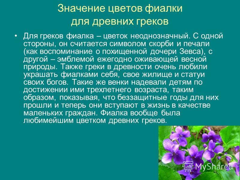 Значение цветов фиалки для древних греков Для греков фиаелка – цветок неоднозначный. С одной стороны, он считается символом скорби и печали (как воспоминание о похищенной дочери Зевса), с другой – эмблемой ежегодно оживающей весной природы. Также гре