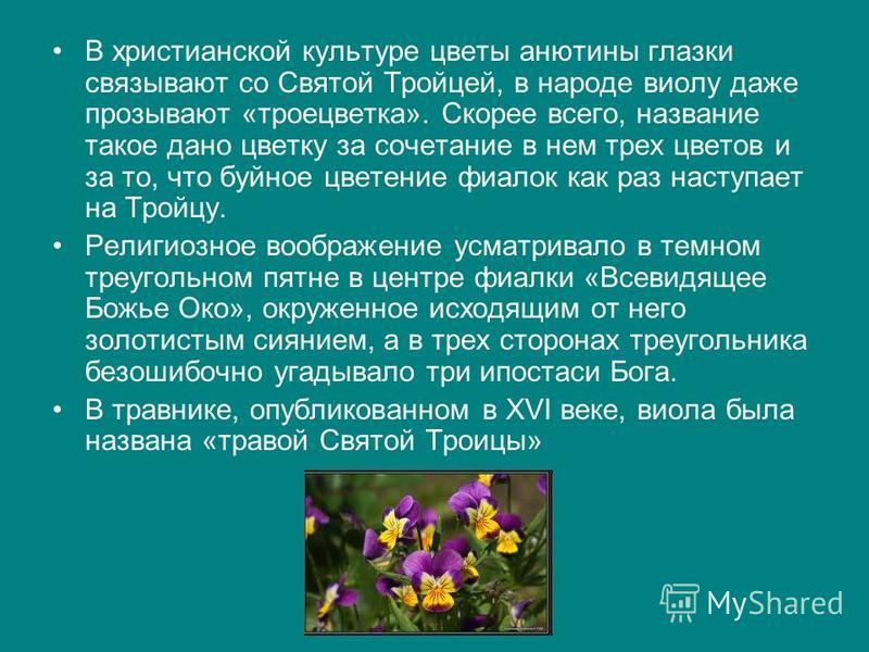 В христианской культуре цветы анютины глазки связывают со Святой Тройцей, в народе виолу даже прозывают «трое цветка». Скорее всего, название такое дано цветку за сочетание в нем трех цветов и за то, что буйное цветение фиалок как раз наступает на Тр