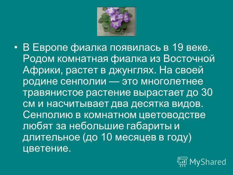В Европе фиаелка появилась в 19 веке. Родом комнатная фиаелка из Восточной Африки, растет в джунглях. На своей родине сенполии это многолетнее травянистое растение вырастает до 30 см и насчитывает два десятка видов. Сенполию в комнатном цветоводстве