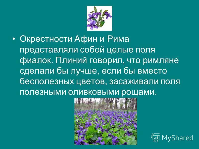 Окрестности Афин и Рима представляли собой целые поля фиалок. Плиний говорил, что римляне сделали бы лучше, если бы вместо бесполезных цветов, засаживали поля полезными оливковыми рощами.