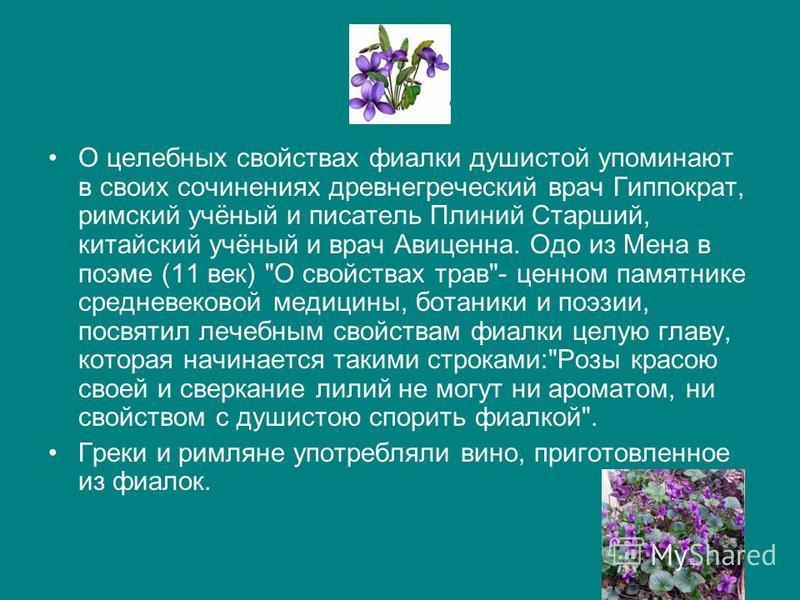 О целебных свойствах фиалки душистой упоминают в своих сочинениях древнегреческий врач Гиппократ, римский учёный и писатель Плиний Старший, китайский учёный и врач Авиценна. Одо из Мена в поэме (11 век)