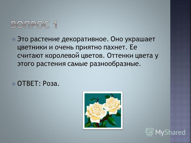 Это растение декоративное. Оно украшает цветники и очень приятно пахнет. Ее считают королевой цветов. Оттенки цвета у этого растения самые разнообразные. ОТВЕТ: Роза.