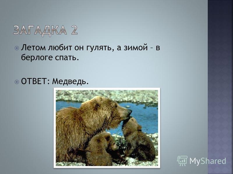 Летом любит он гулять, а зимой – в берлоге спать. ОТВЕТ: Медведь.