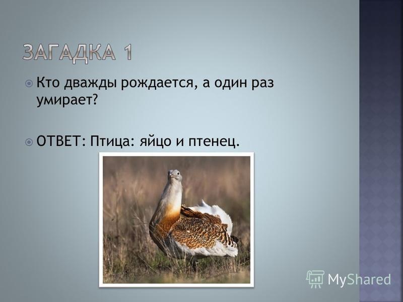 Кто дважды рождается, а один раз умирает? ОТВЕТ: Птица: яйцо и птенец.