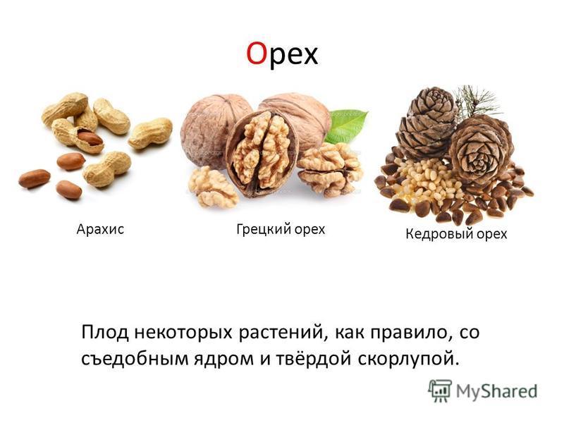 Орех Плод некоторых растений, как правило, со съедобным ядром и твёрдой скорлупой. Арахис Грецкий орех Кедровый орех