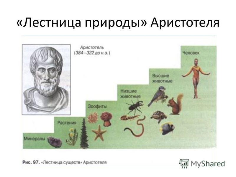 «Лестница природы» Аристотеля