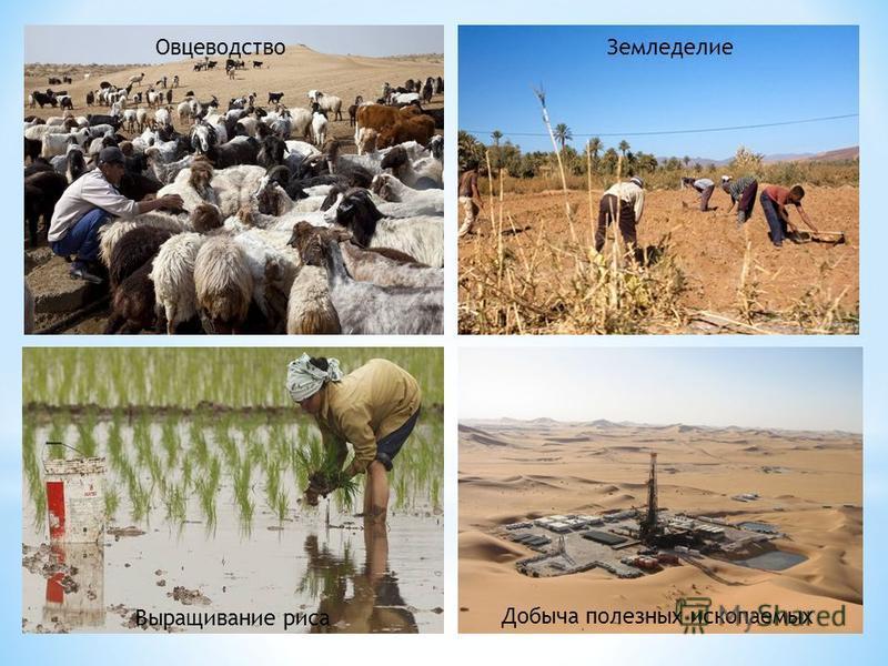 Овцеводство Земледелие Выращивание риса Добыча полезных ископаемых