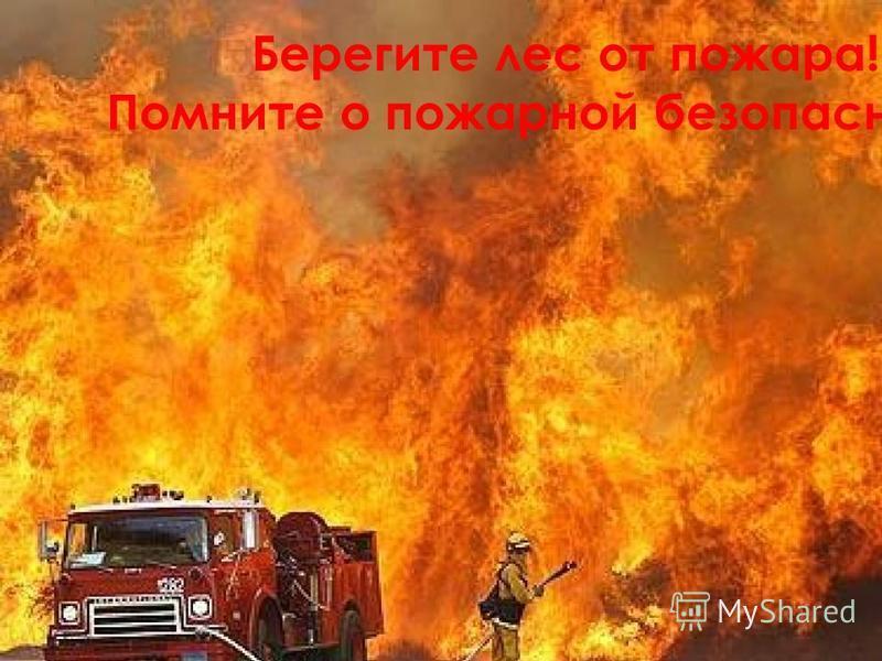 Берегите лес от пожара! Помните о пожарной безопасности!