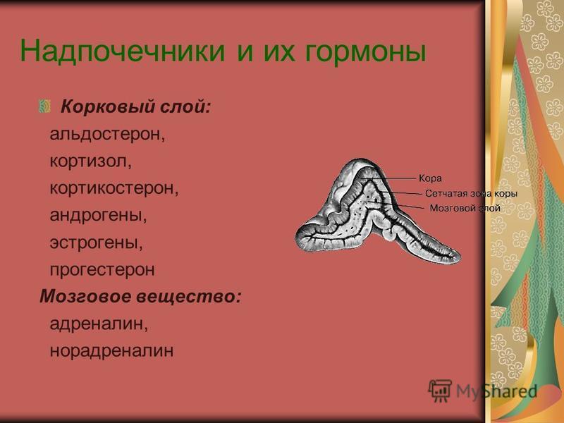 Надпочечники и их гормоны Корковый слой: альдостерон, кортизол, кортикостерон, андрогены, эстрогены, прогестерон Мозговое вещество: адреналин, норадреналин