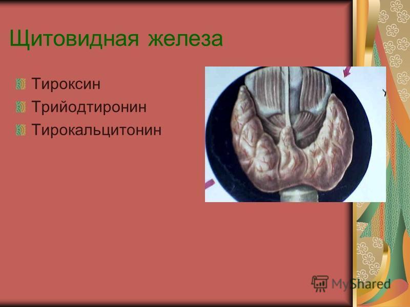 Щитовидная железа Тироксин Трийодтиронин Тирокальцитонин