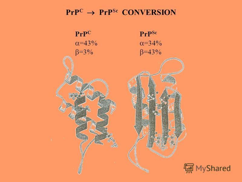 PrP C =43% =3% PrP Sc =34% =43% PrP C PrP Sc CONVERSION