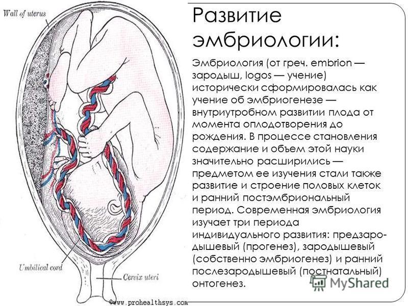 Развитие эмбриологии: Эмбриология (от греч. embrion зародыш, logos учение) исторически сформировалась как учение об эмбриогенезе внутриутробном развитии плода от момента оплодотворения до рождения. В процессе становления содержание и объем этой науки