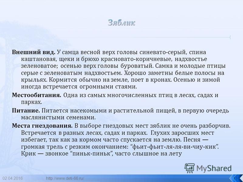 02.04.201610 зяблик http://www.deti-66.ru/