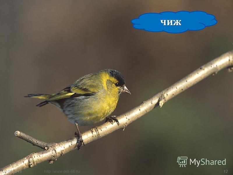 Внешний вид. У самца весной верх головы синевато-серый, спина каштановая, щеки и брюхо красновато-коричневые, надхвостье зеленоватое; осенью верх головы буроватый. Самка и молодые птицы серые с зеленоватым надхвостьем. Хорошо заметны белые полосы на